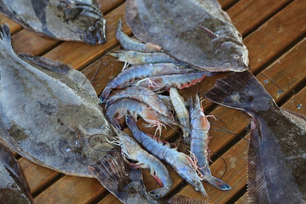 Fairhope Jubilee Flounder Shrimp.jpg