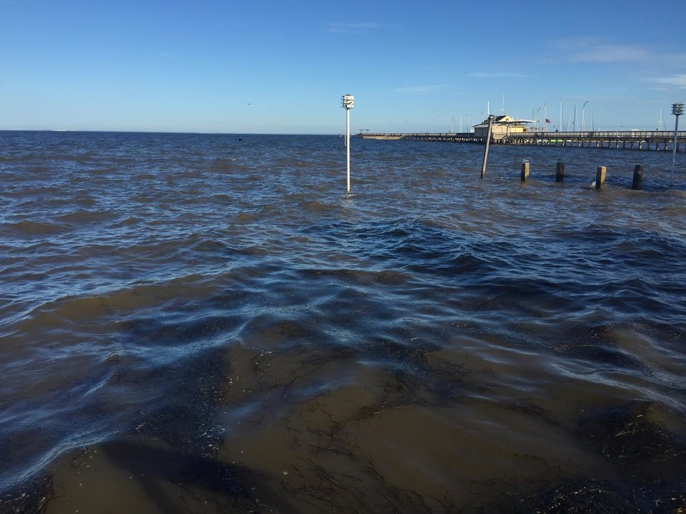 High turbidity can be seen at the time of sample collection on 05/29.