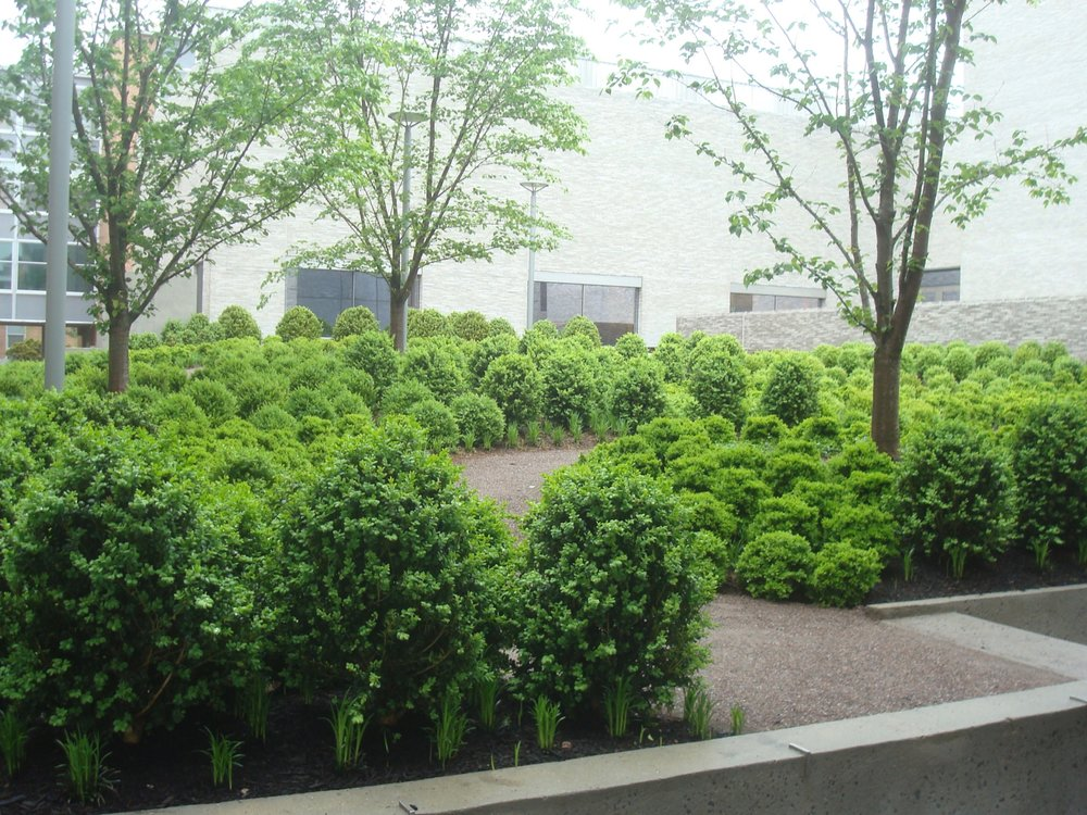 'Green roof' at Andlinger Center
