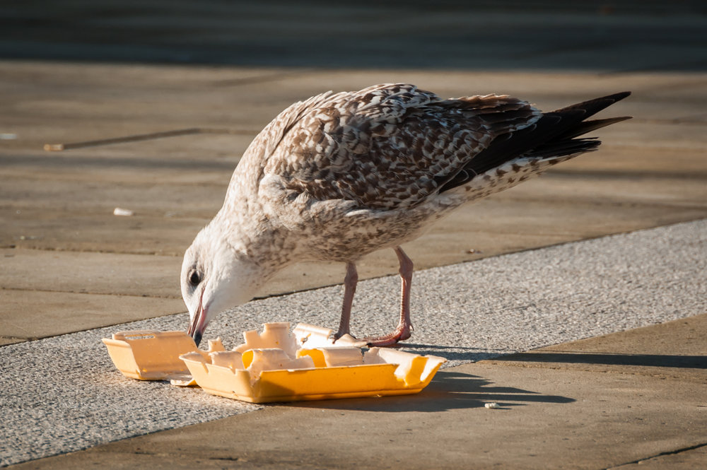 Email_bird photo.jpg
