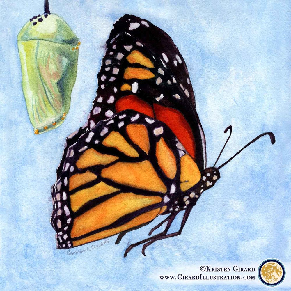 Mother Monarch Butterfly and Chrysalis