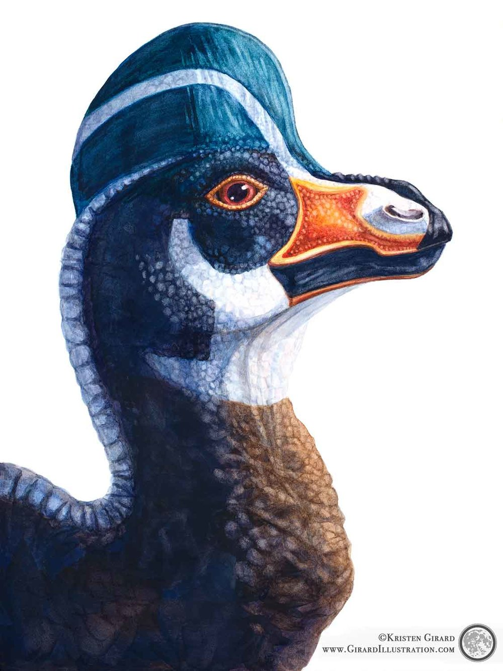 A Corythosaurus dinosaur with striking black, white, orange, brown, and yellow markings looks at you with calm red eyes. The dinosaur has a pronounced beak that looks a little like a duck's. This dinosaur art makes a lovely addition to a dinosaur themed room. © Kristen Girard. Watercolor painting. Fine art print can be purchased in the  Art and Story Shop.