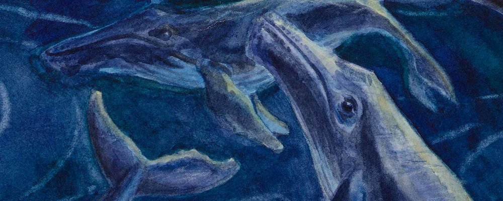 A humpback whale pod swims together in the blue ocean in this deeply vibrant watercolor illustration of ocean life by artist Kristen Girard of Girard Illustration. Deep blue colors play off light blue hues in this peaceful ocean painting. © Kristen Girard