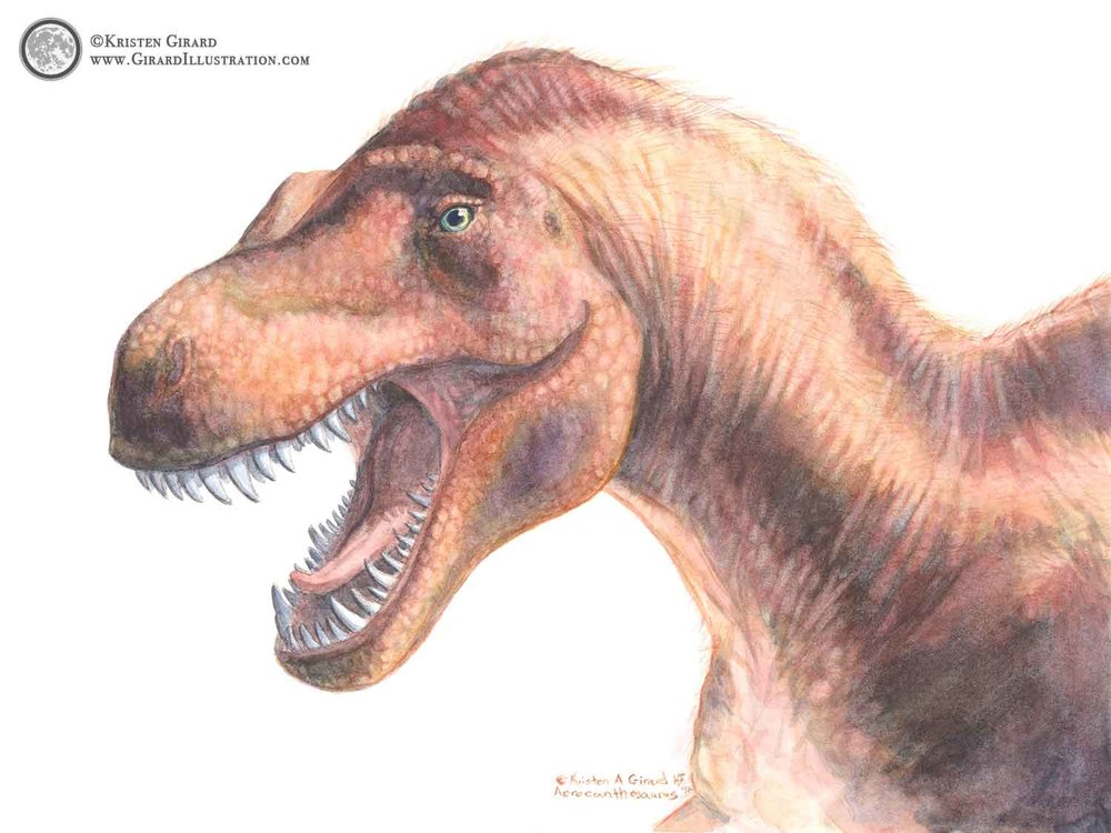 Red dinosaur watercolor artwork. A realistically painted carnivorous dinosaur called Acrocanthosaurus that looks like she is stepping through time and into your room to roarrr good morning! © 2016 Kristen Girard of Girard Illustration