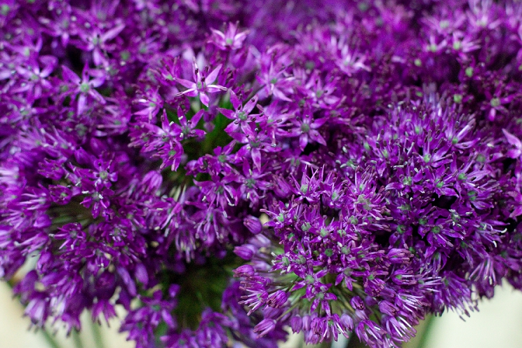 Flowers Week 2015 Day 3 Alliums - Purple Sensation -Presented to you by New Covent Garden Flower Market