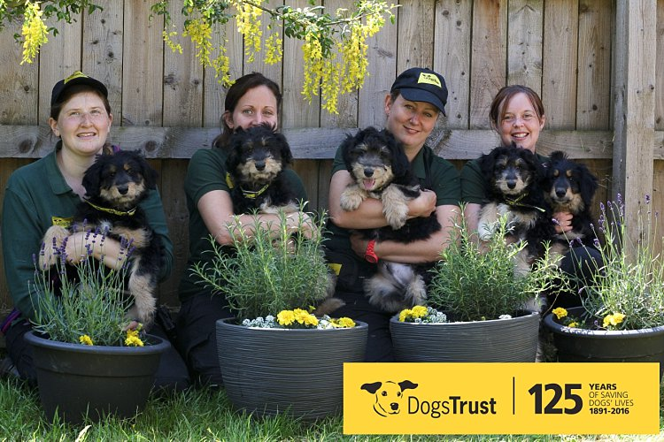 Five dogs which were named after British Flowers for British Flowers Week 2016