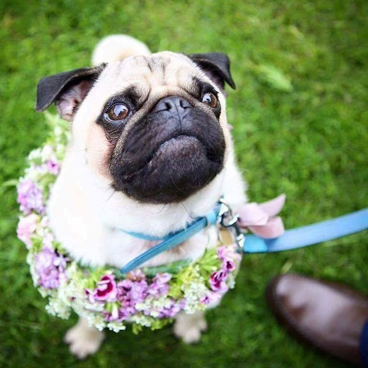 Native-Flower-Farm-pug-British-Flowers-Week