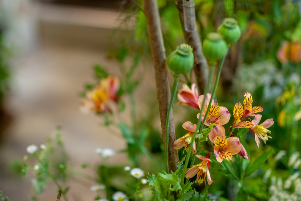 Harrys-Flowers-installation-British-Flowers-Week-2018-at-Garden-Museum-by-New-Covent-Garden-Market (3).jpg