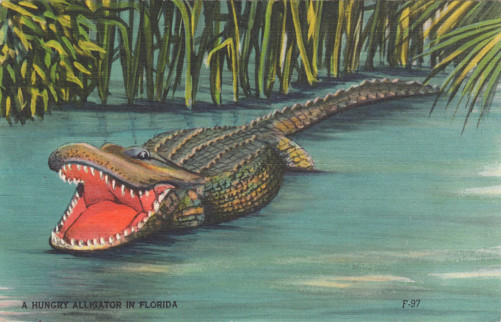 hungry-alligator.jpg