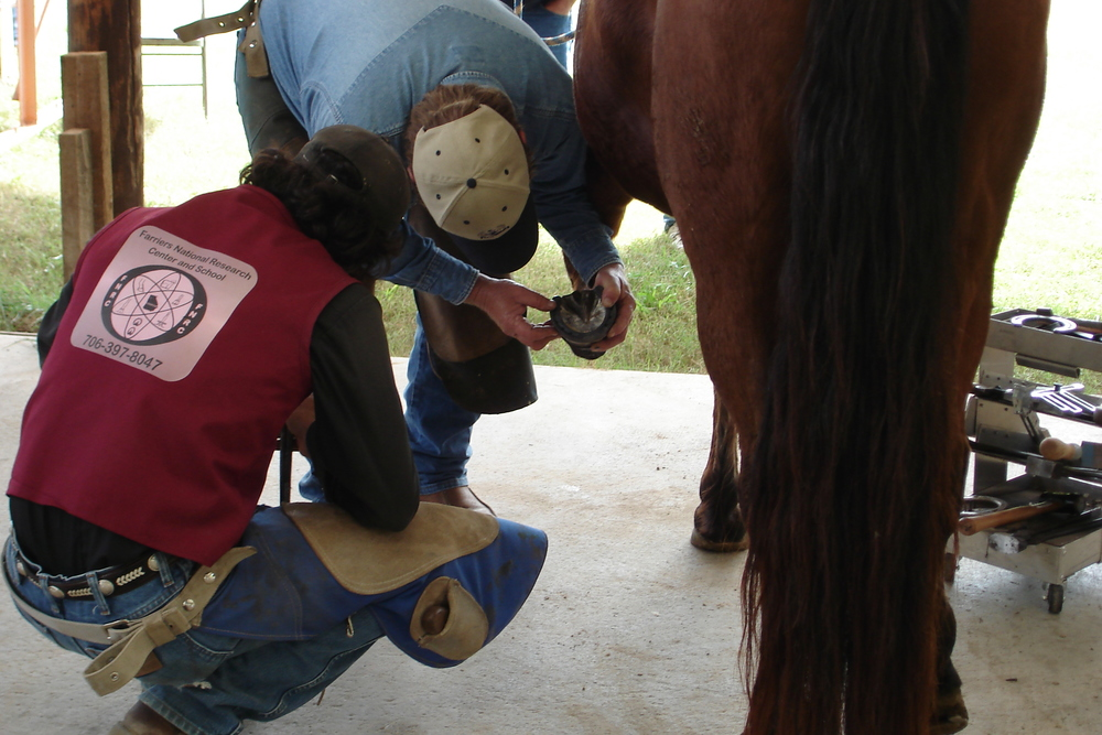Farriers' National Research Center Clinics for farriers and owners.JPG