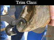 Squarespace trim class.jpg