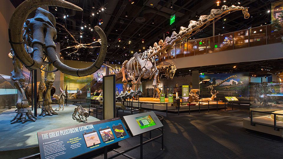Perot museum discount coupon