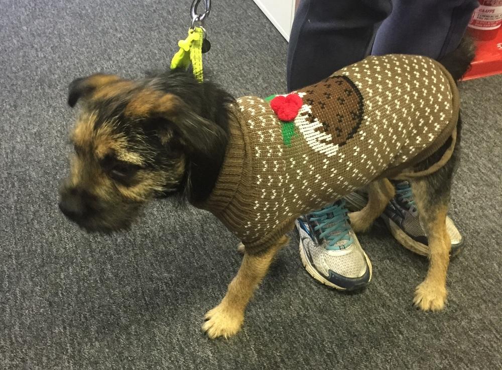 brodie in his christmas jumper3.jpg