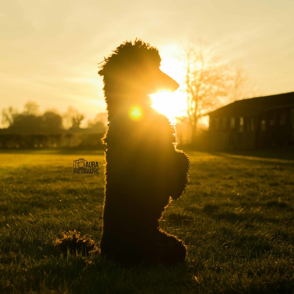tilly-silouette