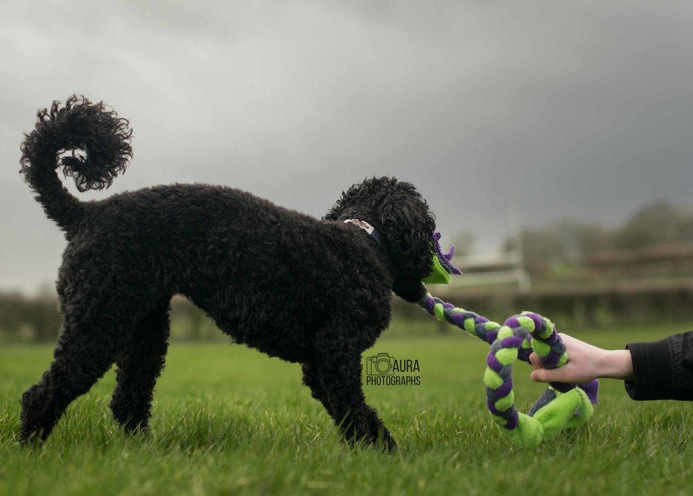 black_dog_grey_cloud