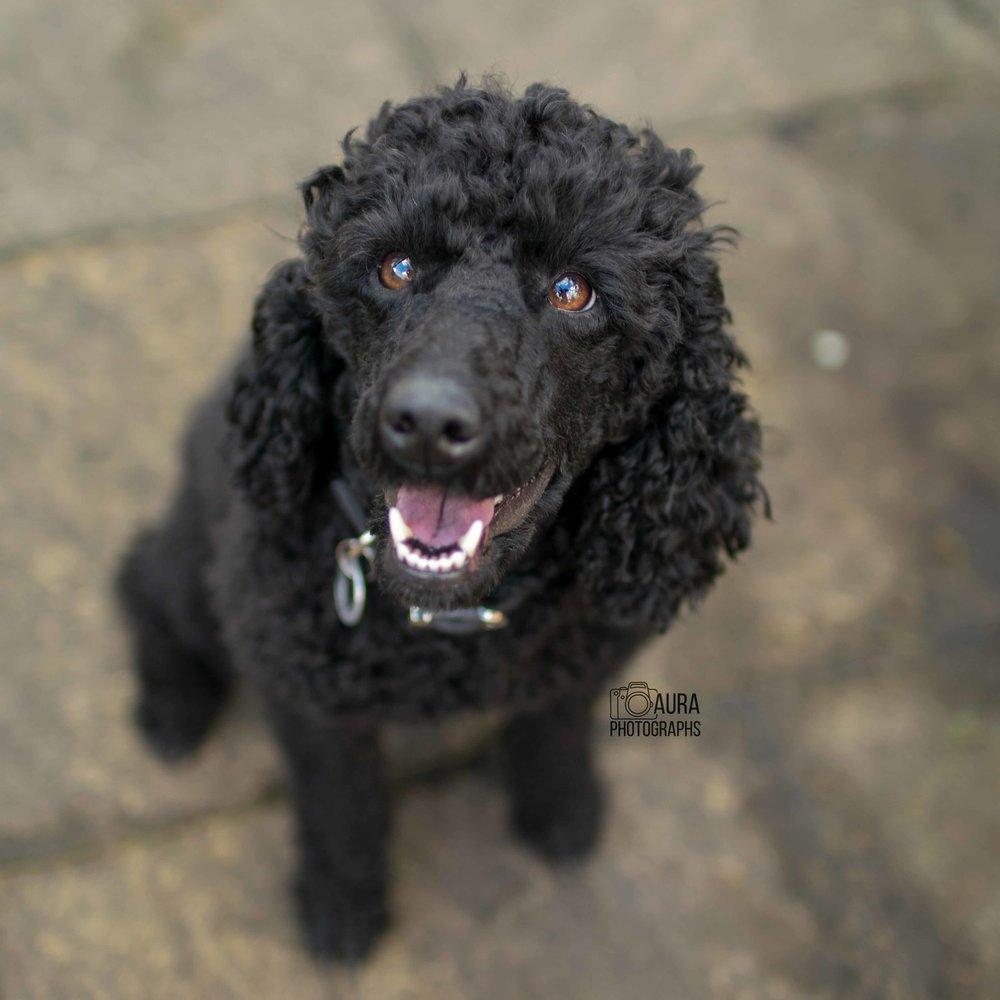 black_dog_tilly.jpg