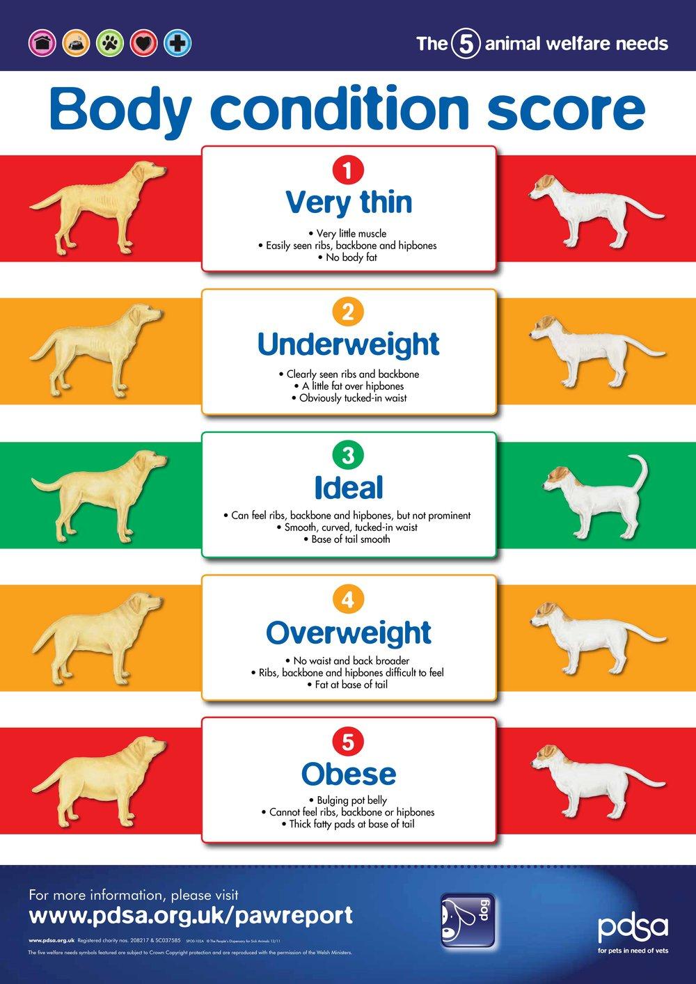 PDSA Dog obesity chart