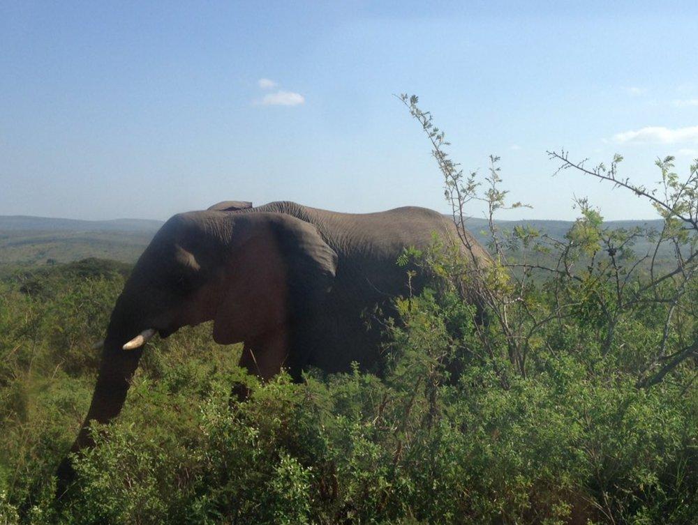 The Big Five meet St. Mary's... - Elephants - ✅Buffalo - ✅Leopard - ✅Lions - ✅Rhinos - ✅