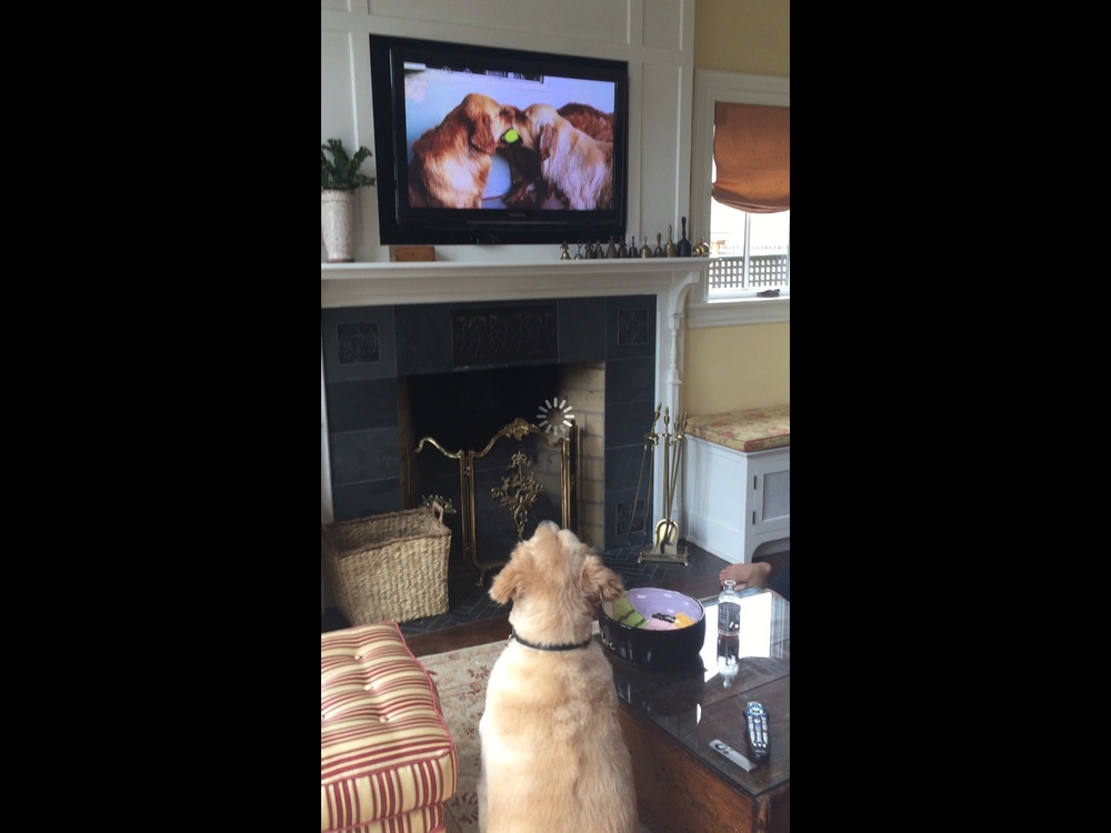 Max watching YouTube