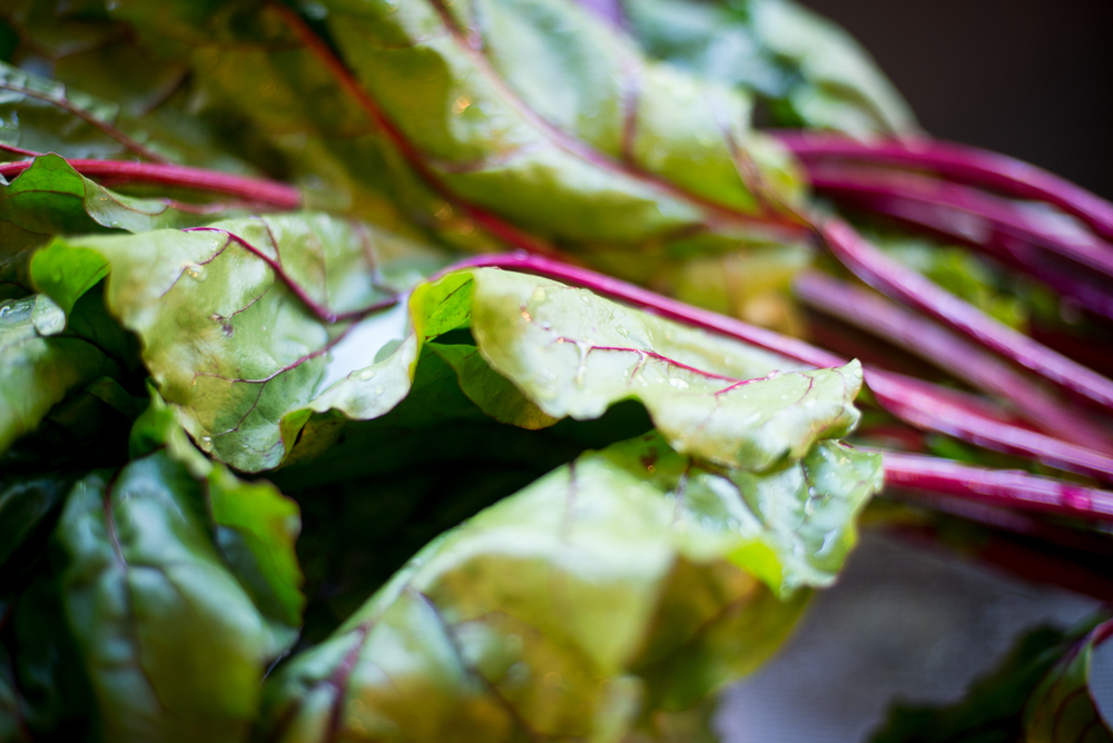 The magenta veins are rich in vitamins.  The greens are a great source of vitamin C, potassium and manganese.  Beets also contain the B vitamin folate.