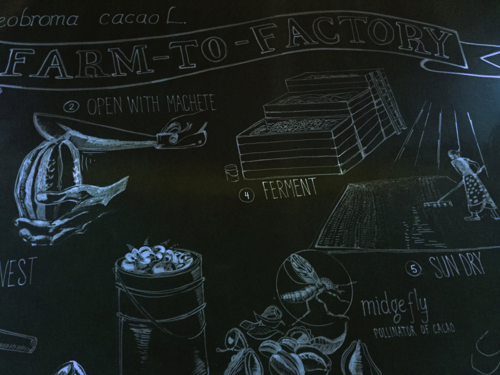 This is a chalkboard illustration about the cocoa farm process that i saw at French Broad Chocolates in Asheville.