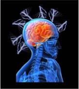 brain on story.jpg