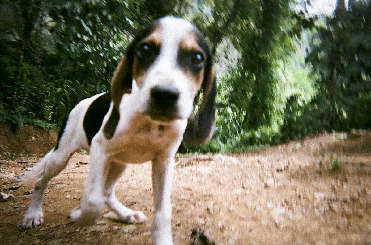 Curious Puppy, Costa Rica