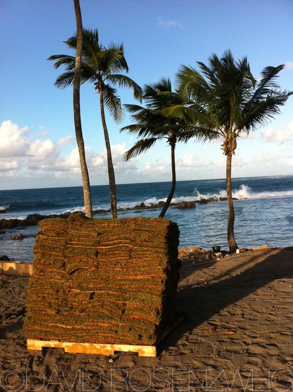 Pallet of Puerto Rican sod