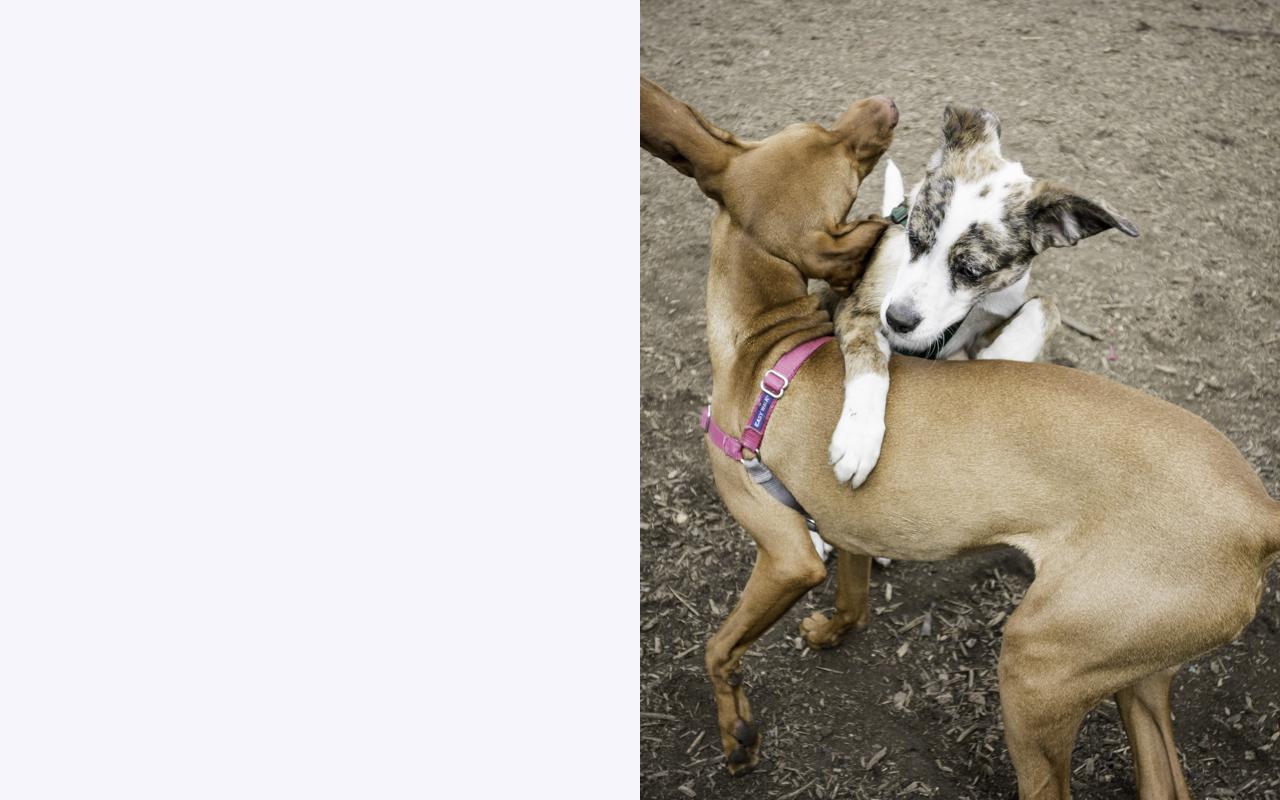 Dancing pups