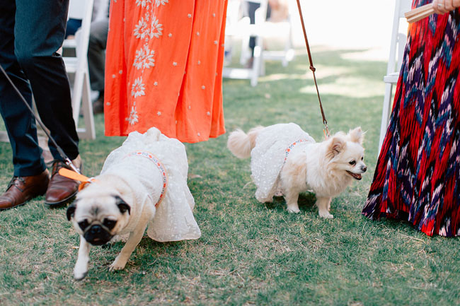 If you decide to dress your pups up, erring on the side of simplicity is definitely the way to go.  |  Photo by  Mike Cassimatis  via  Green Wedding Shoes