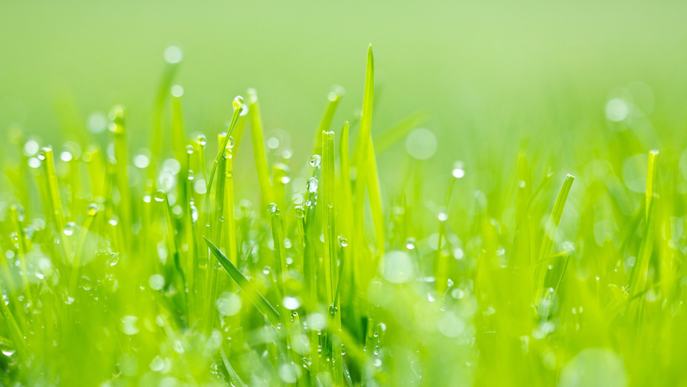 IMG_perfect_lawn_11.jpg