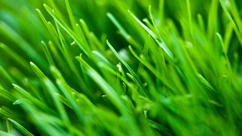 IMG_perfect_lawn_15.jpg