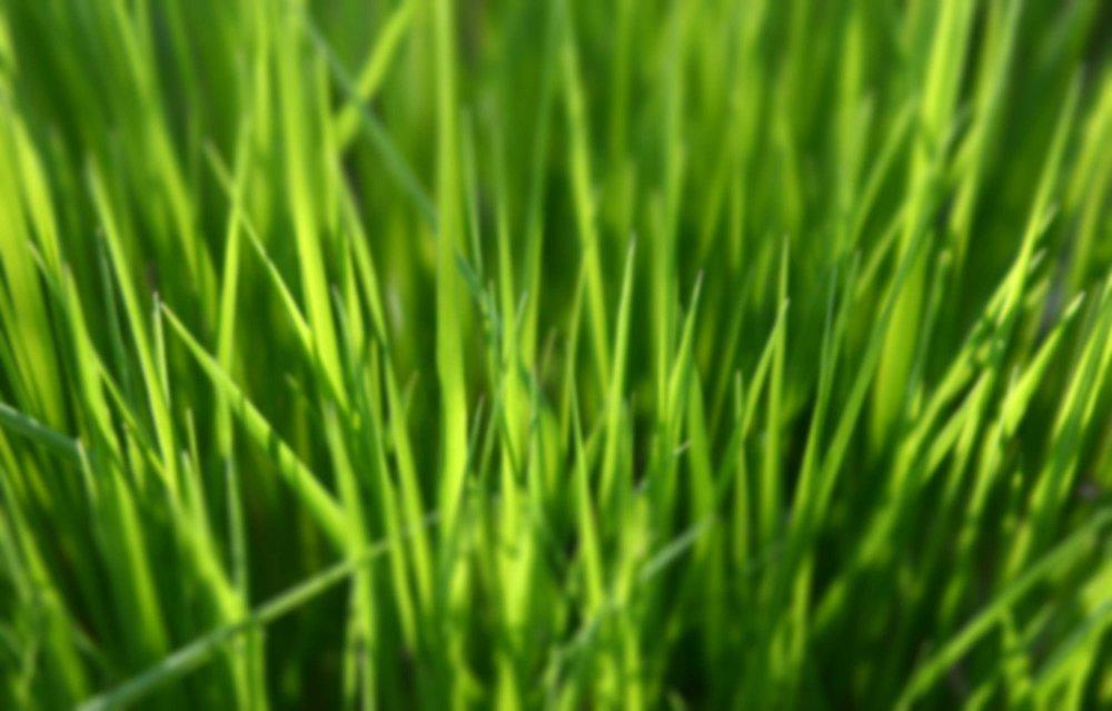 AGZA_IMG_GRASS_BLUR_3072x1964.jpg