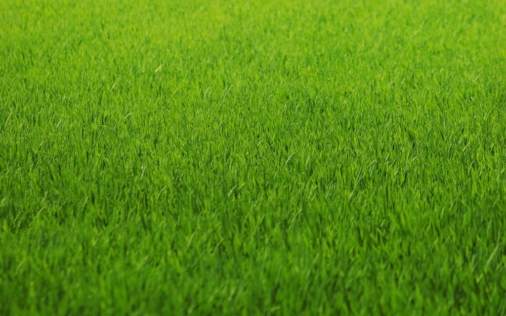 AGZA_IMG_GRASS_2560x1600.jpg