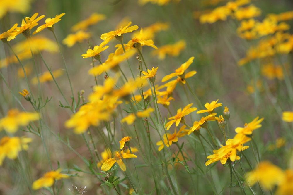 bokeh-plant-field-photographer-meadow-prairie-402842-pxhere.com.jpg