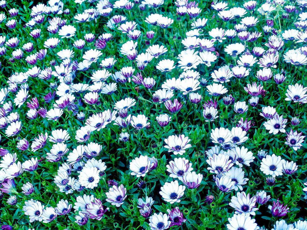garden-nature-plant-flower-floral-green-1442917-pxhere.com.jpg