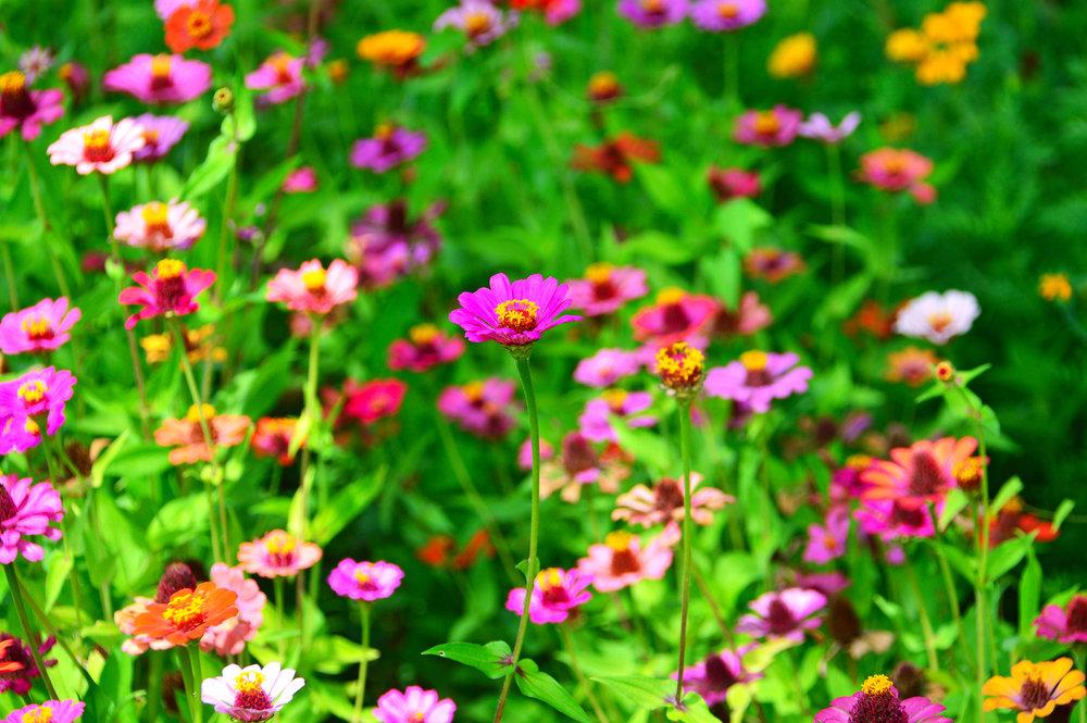 flowers-flower-wildflowers-field-meadow-summer-1446551-pxhere.com.jpg