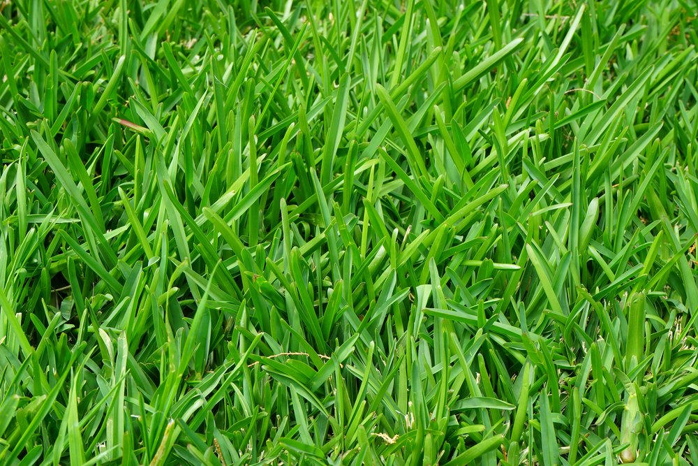 grass-growth-plant-lawn-meadow-green-957484-pxhere.com.jpg
