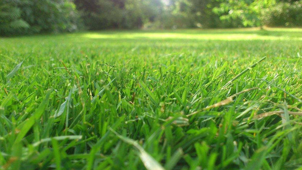 grass-plant-field-lawn-meadow-prairie-1012940-pxhere.com.jpg