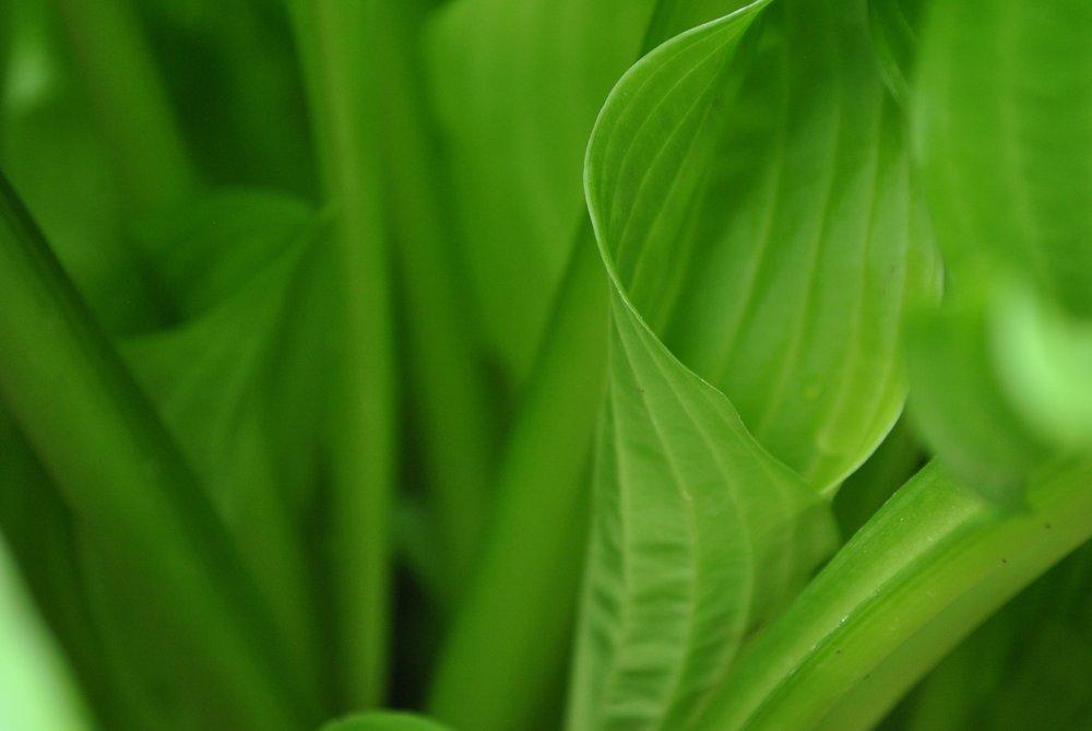 grass-plant-lawn-sunlight-leaf-flower-10903-pxhere.com.jpg