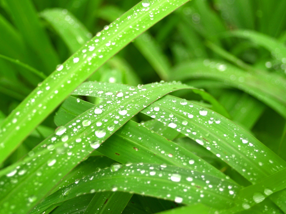leaf-nature-water-green-freshness-dew-1440545-pxhere.com.jpg