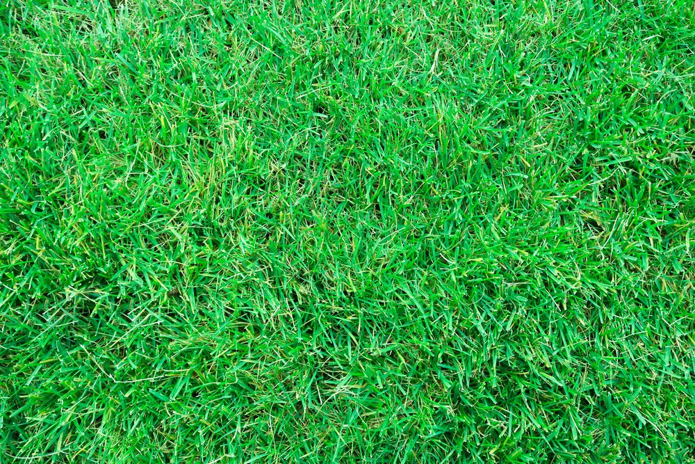 landscape-nature-grass-growth-plant-field-700353-pxhere.com.jpg