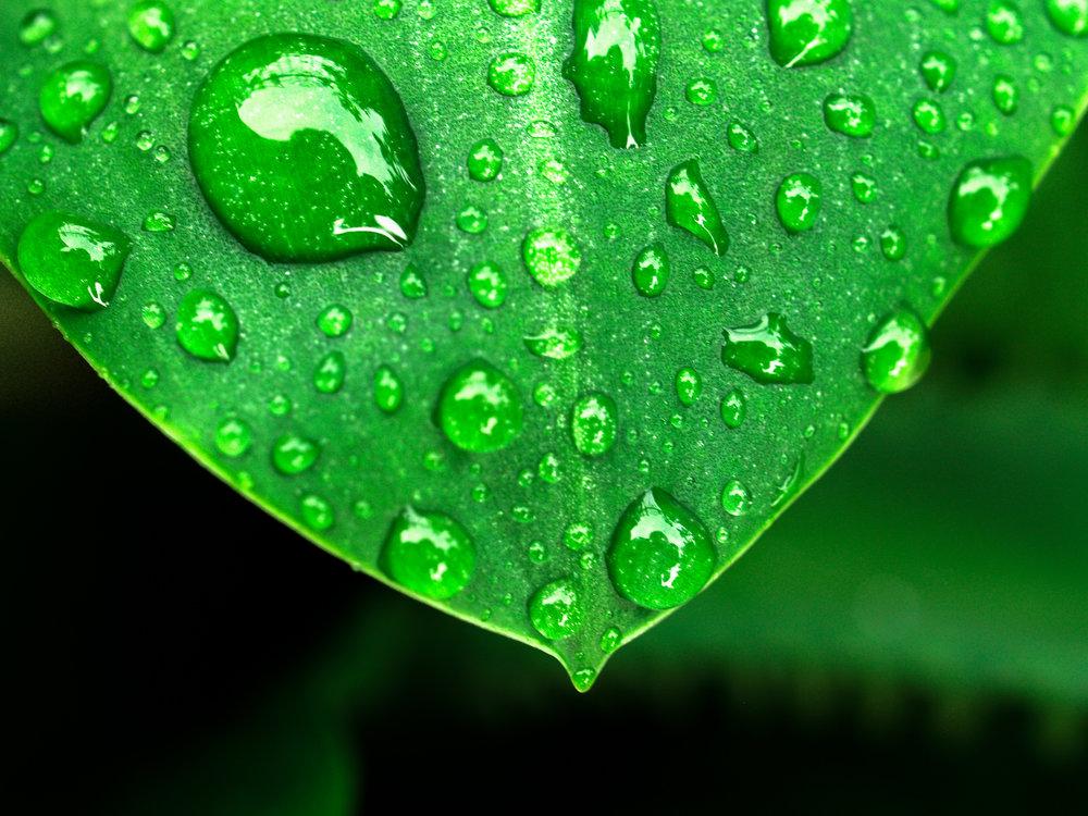 leaf-nature-water-green-freshness-dew-1441339-pxhere.com.jpg
