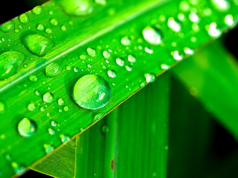 leaf-nature-water-green-freshness-dew-1441341-pxhere.com.jpg