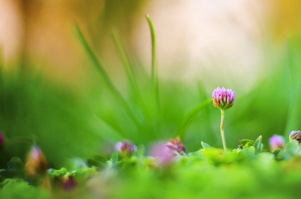 nature-grass-blossom-plant-field-lawn-805790-pxhere.com.jpg