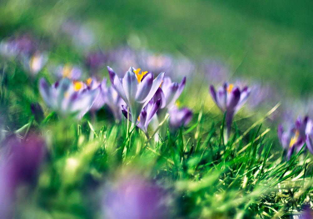 nature-grass-blossom-plant-field-lawn-1201212-pxhere.com.jpg
