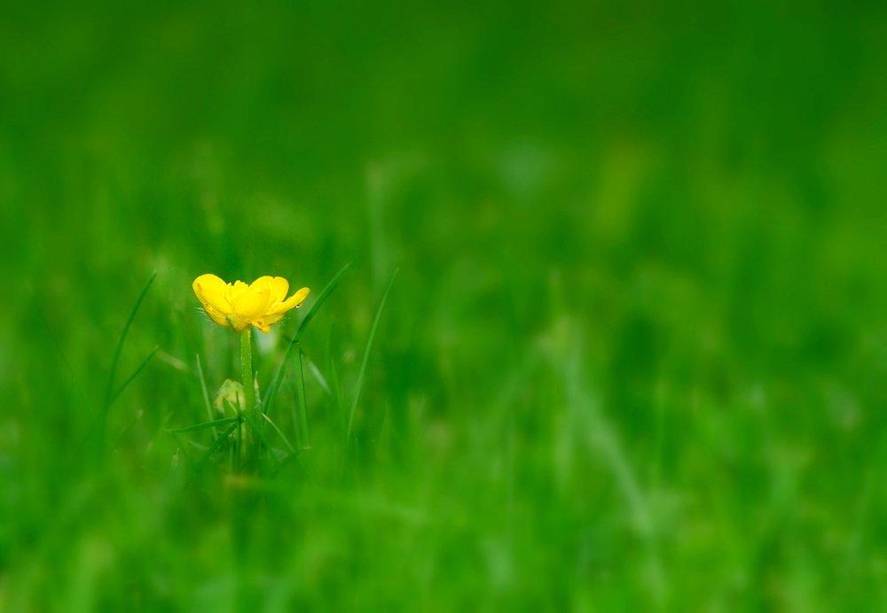 nature-grass-plant-field-lawn-meadow-823304-pxhere.com.jpg
