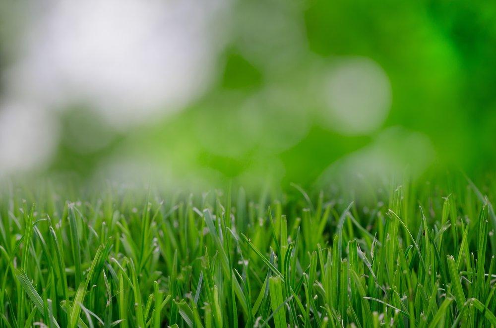 nature-grass-plant-field-lawn-meadow-714086-pxhere.com.jpg