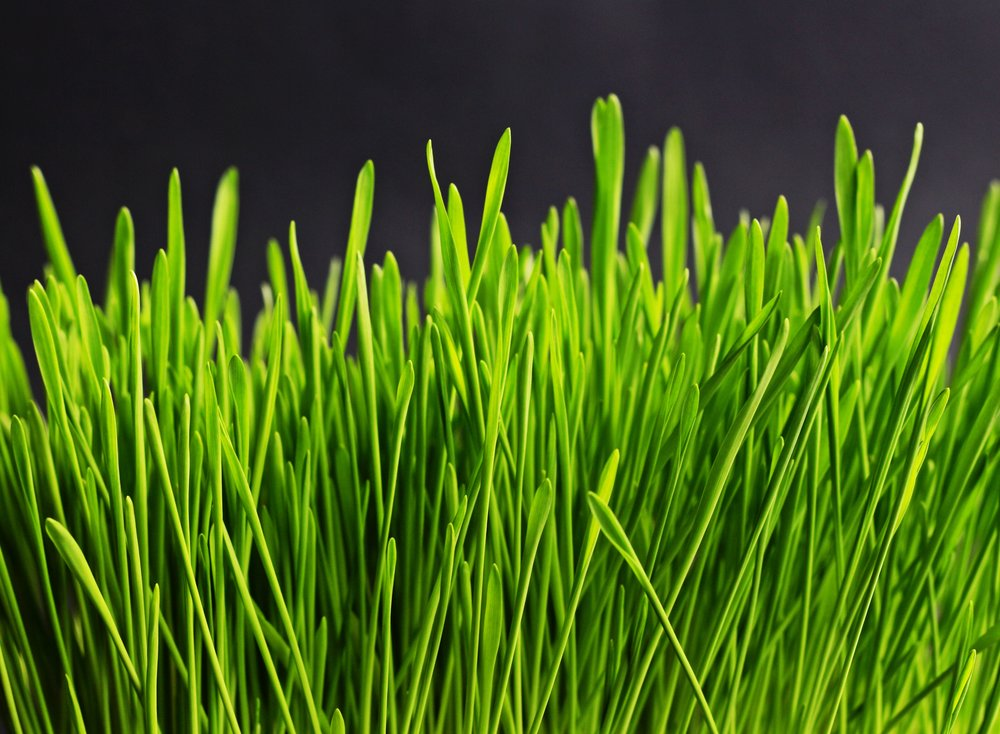 nature-grass-plant-lawn-meadow-leaf-922944-pxhere.com.jpg