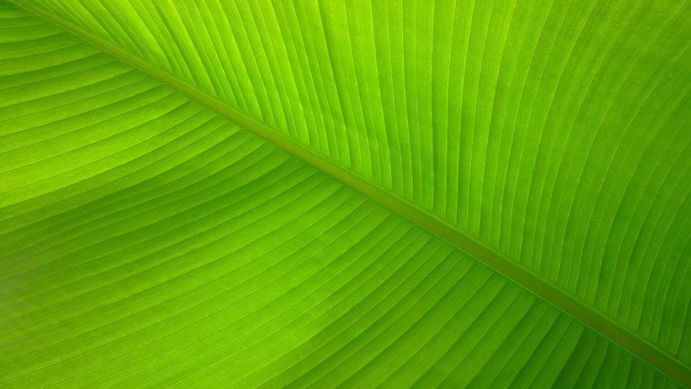 nature-grass-plant-sunlight-leaf-flower-1228393-pxhere.com.jpg
